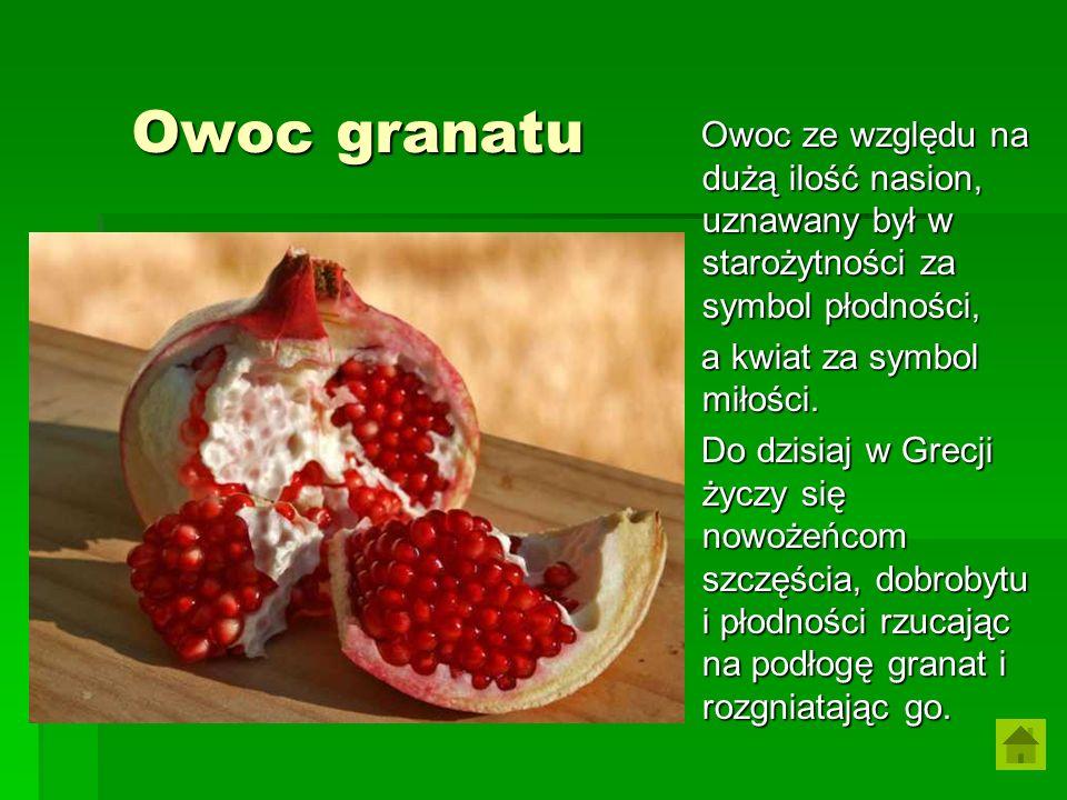 Owoc granatu Owoc ze względu na dużą ilość nasion, uznawany był w starożytności za symbol płodności, Owoc ze względu na dużą ilość nasion, uznawany by