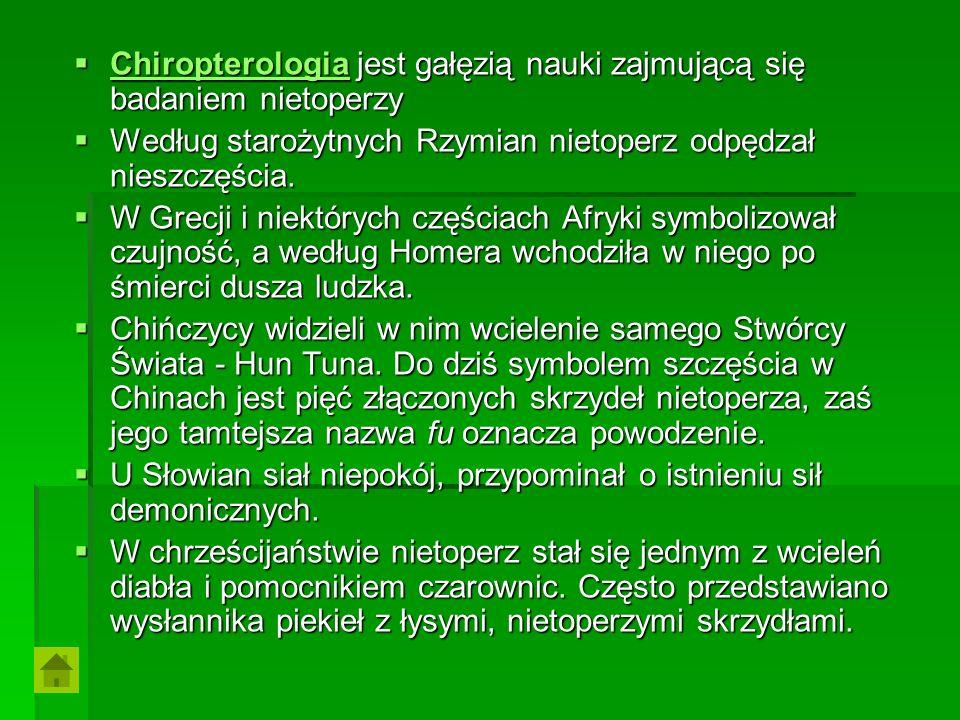 Chiropterologia jest gałęzią nauki zajmującą się badaniem nietoperzy Chiropterologia jest gałęzią nauki zajmującą się badaniem nietoperzy Chiropterolo