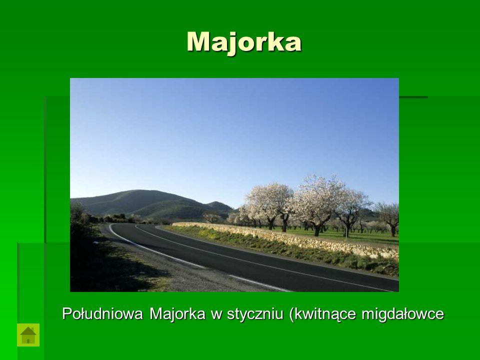 Majorka Południowa Majorka w styczniu (kwitnące migdałowce Południowa Majorka w styczniu (kwitnące migdałowce