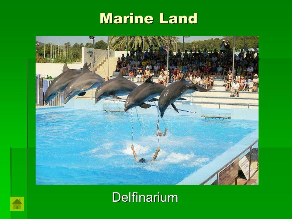 Marine Land Delfinarium