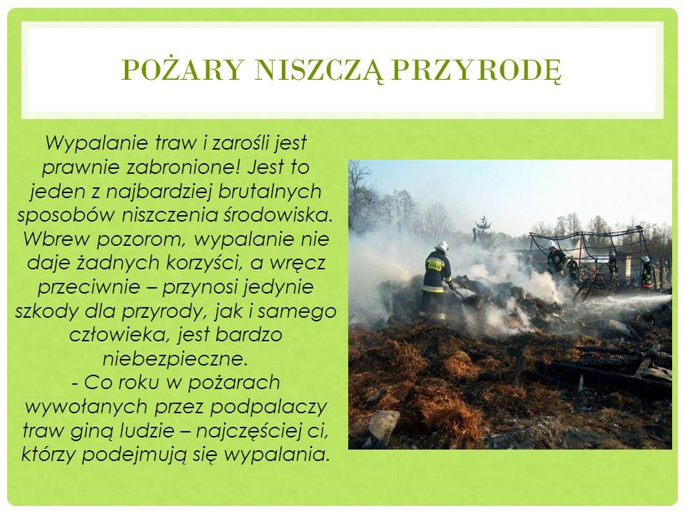 PO Ż ARY NISZCZ Ą PRZYROD Ę Wypalanie traw i zarośli jest prawnie zabronione! Jest to jeden z najbardziej brutalnych sposobów niszczenia środowiska. W