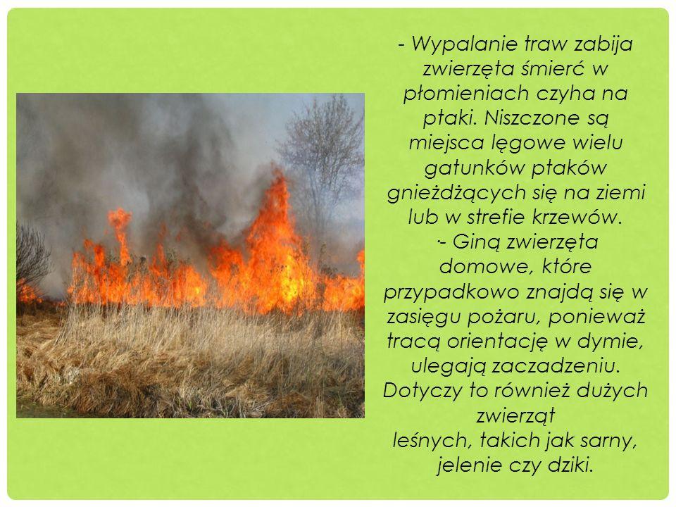 - Wypalanie traw zabija zwierzęta śmierć w płomieniach czyha na ptaki. Niszczone są miejsca lęgowe wielu gatunków ptaków gnieżdżących się na ziemi lub