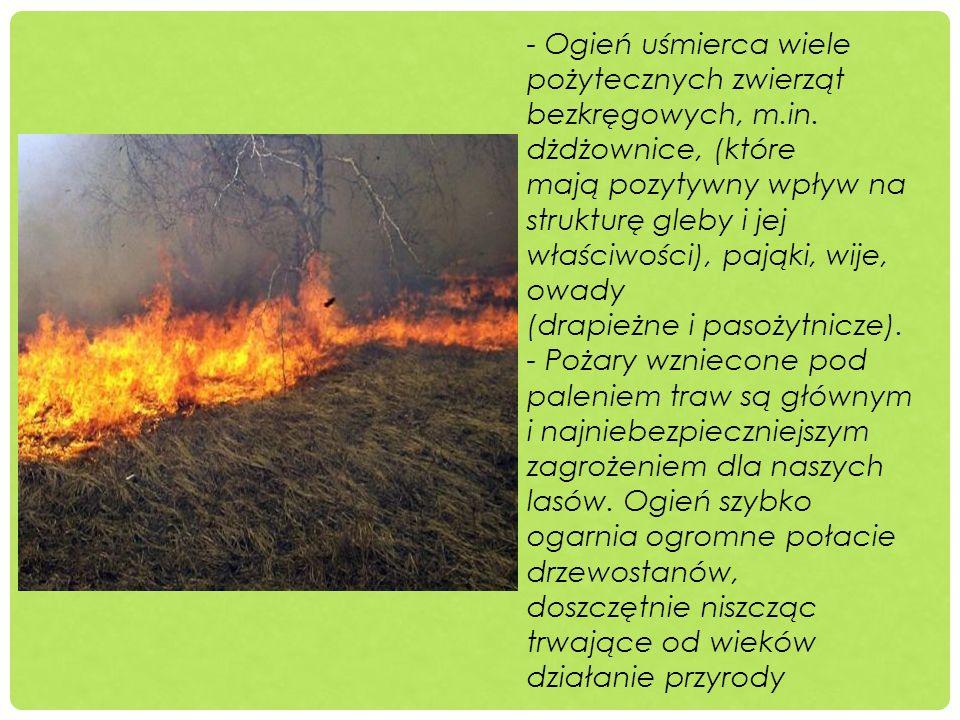 - Ogień uśmierca wiele pożytecznych zwierząt bezkręgowych, m.in. dżdżownice, (które mają pozytywny wpływ na strukturę gleby i jej właściwości), pająki
