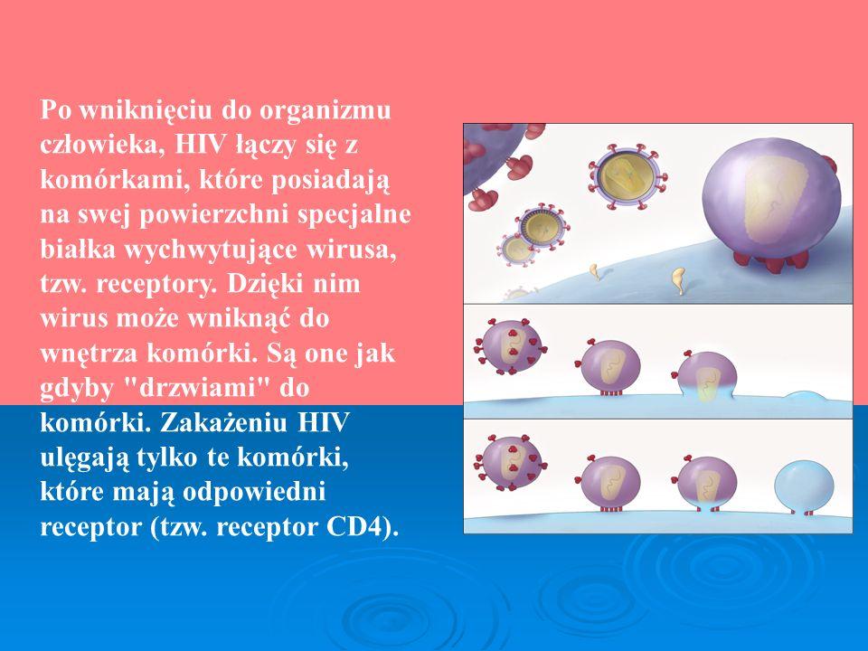 Po wniknięciu do organizmu człowieka, HIV łączy się z komórkami, które posiadają na swej powierzchni specjalne białka wychwytujące wirusa, tzw. recept