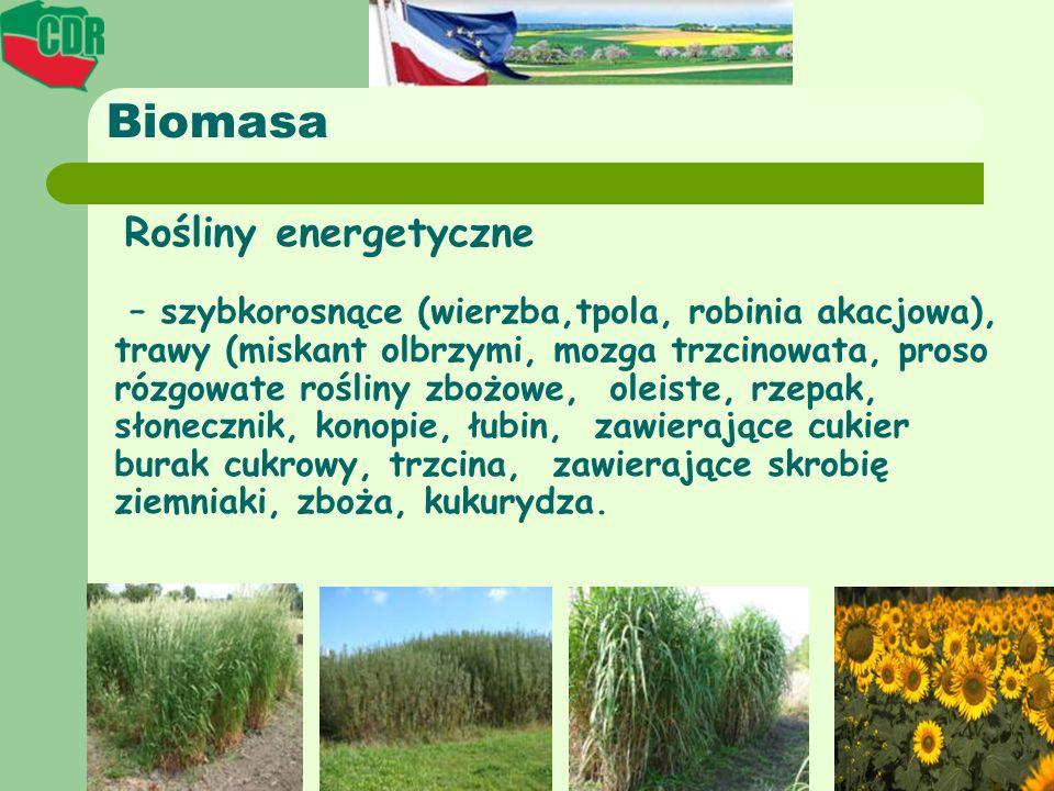 Biomasa Rośliny energetyczne – szybkorosnące (wierzba,tpola, robinia akacjowa), trawy (miskant olbrzymi, mozga trzcinowata, proso rózgowate rośliny zb