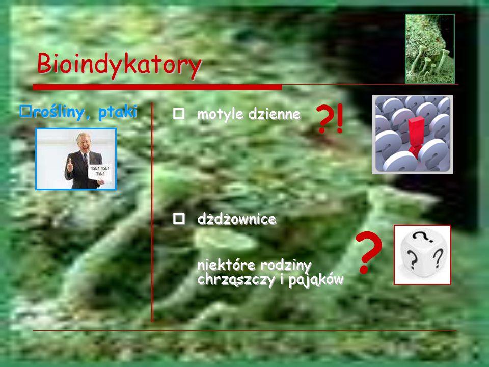 Bioindykatory motyle dzienne motyle dzienne dżdżownice dżdżownice niektóre rodziny chrząszczy i pająków ? ?! rośliny, ptaki rośliny, ptaki