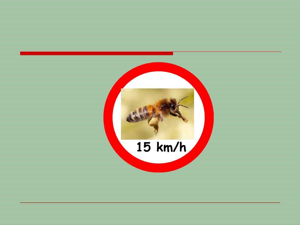 15 km/h