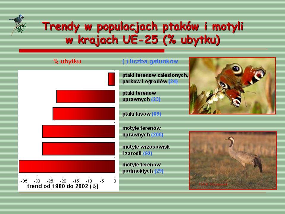 Trendy w populacjach ptaków i motyli w krajach UE-25 (% ubytku) Fot.M. Szczepanek
