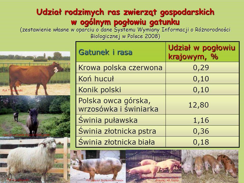 Udział rodzimych ras zwierząt gospodarskich w ogólnym pogłowiu gatunku (zestawienie własne w oparciu o dane Systemu Wymiany Informacji o Różnorodności