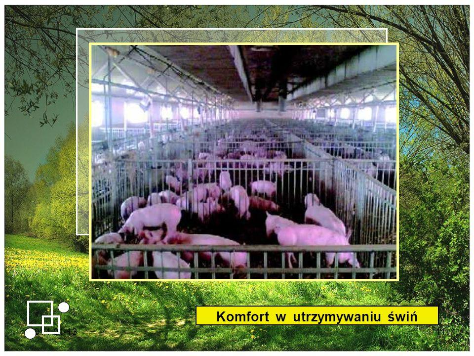 2014-01-1311 Komfort w utrzymywaniu świń