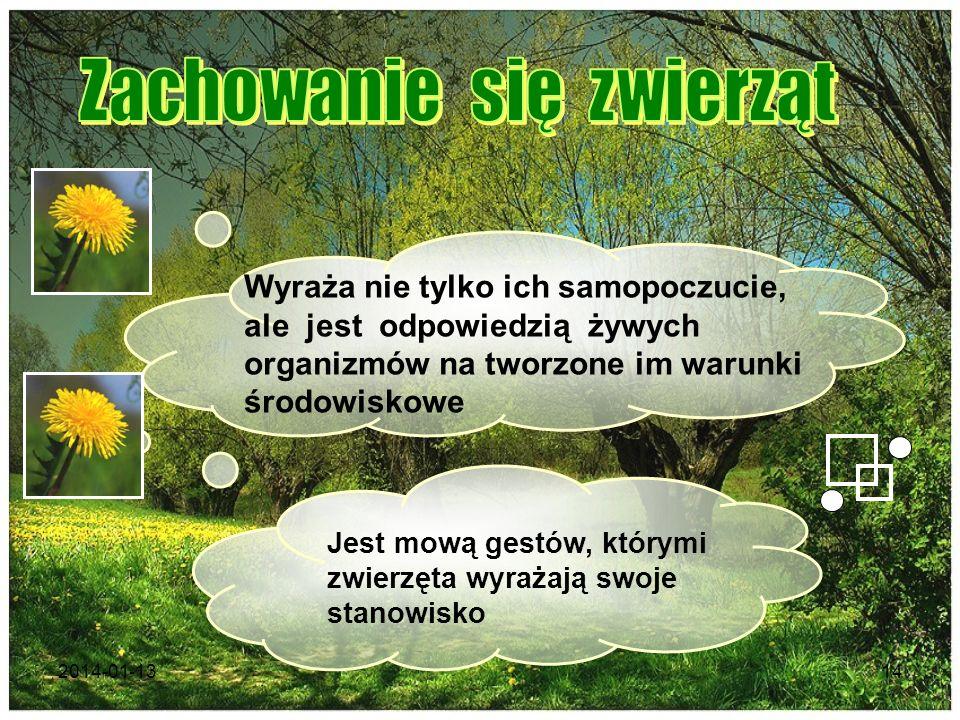 2014-01-1314 Wyraża nie tylko ich samopoczucie, ale jest odpowiedzią żywych organizmów na tworzone im warunki środowiskowe Jest mową gestów, którymi z