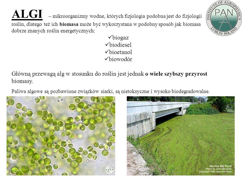 ALGI – mikroorganizmy wodne, których fizjologia podobna jest do fizjologii roślin, dlatego też ich biomasa może być wykorzystana w podobny sposób jak biomasa dobrze znanych roślin energetycznych: biogaz biodiesel bioetanol biowodór Główną przewagą alg w stosunku do roślin jest jednak o wiele szybszy przyrost biomasy.