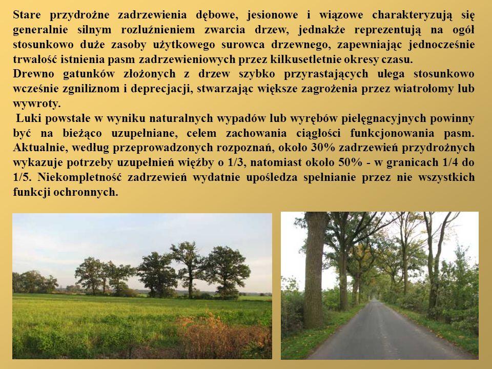 Stare przydrożne zadrzewienia dębowe, jesionowe i wiązowe charakteryzują się generalnie silnym rozluźnieniem zwarcia drzew, jednakże reprezentują na o