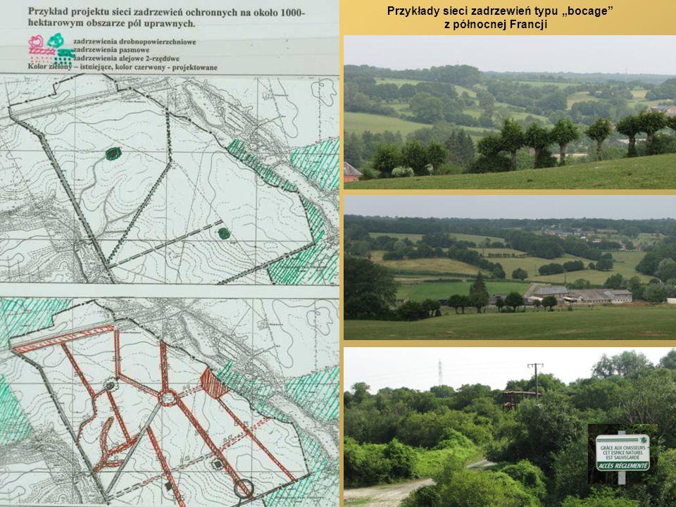 Przykłady sieci zadrzewień typu bocage z północnej Francji