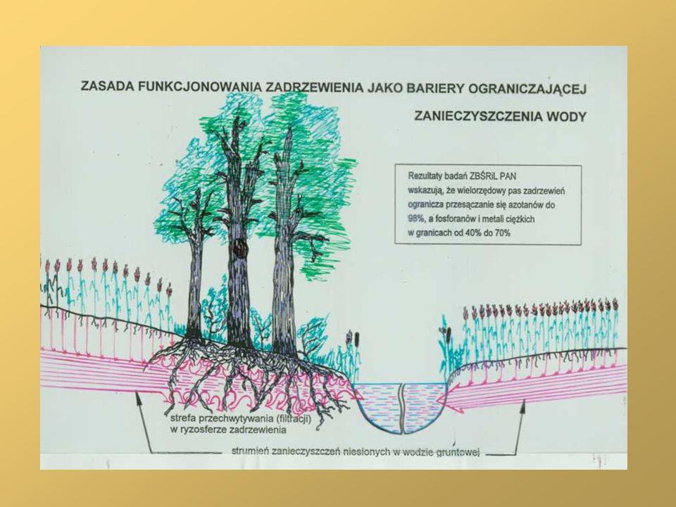 Pasmowe zadrzewienie liściaste przecinające kompleks bezdrzewnych pól