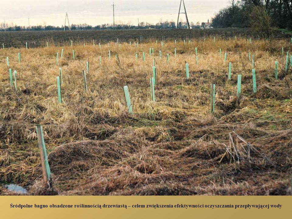 Bezdrzewne pola po usunięcia zadrzewień przydrożnych oraz stare zadrzewienie lipowe mogące stwarzać zagrożenie w czasie huraganów z powodu deprecjacji drewna