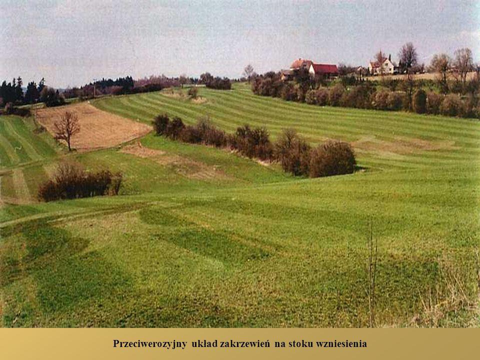 Przeciwerozyjny układ zakrzewień na stoku wzniesienia