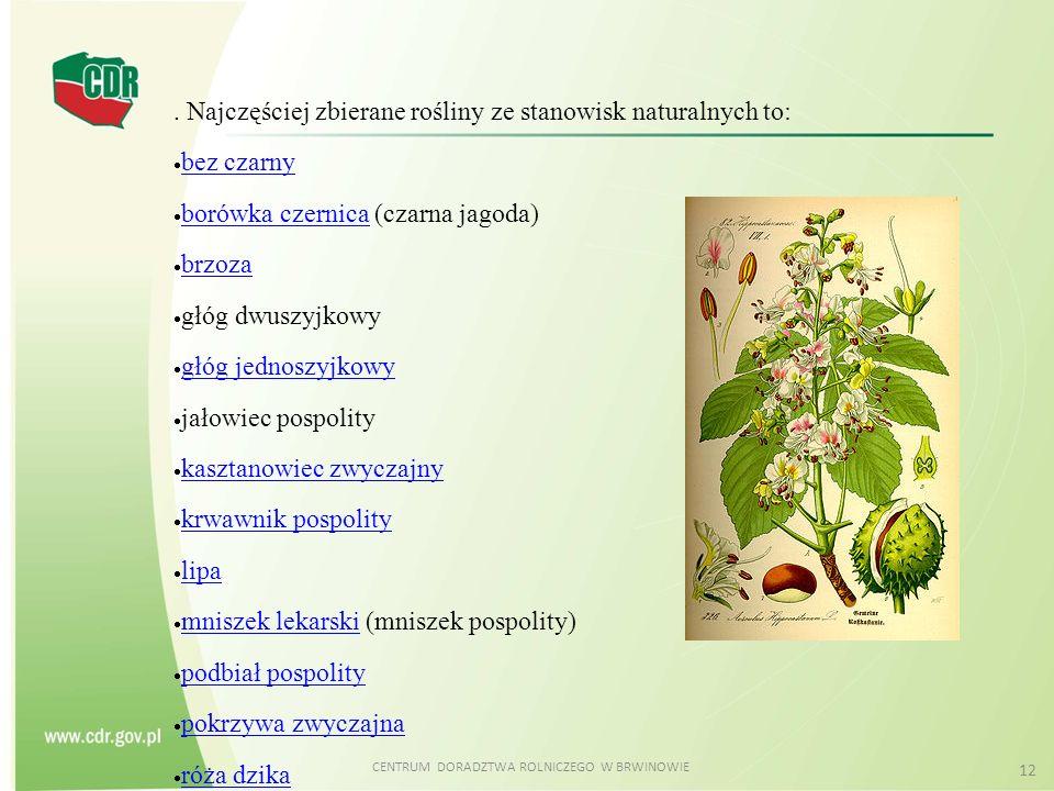 CENTRUM DORADZTWA ROLNICZEGO W BRWINOWIE 12. Najczęściej zbierane rośliny ze stanowisk naturalnych to: bez czarny borówka czernica (czarna jagoda) bor