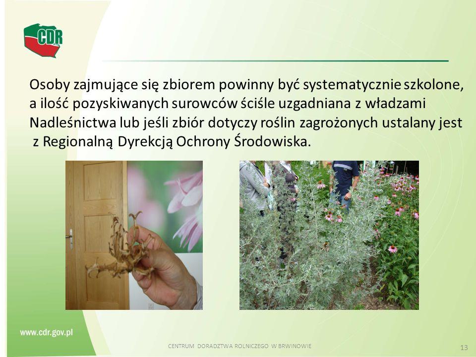 CENTRUM DORADZTWA ROLNICZEGO W BRWINOWIE 13 Osoby zajmujące się zbiorem powinny być systematycznie szkolone, a ilość pozyskiwanych surowców ściśle uzg