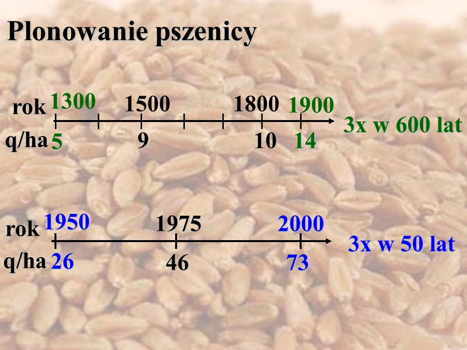 3x w 600 lat 3x w 50 lat rok q/ha rok q/ha 1950 20001975 5 1410 9 26 4673 Plonowanie pszenicy 1300 15001800 1900