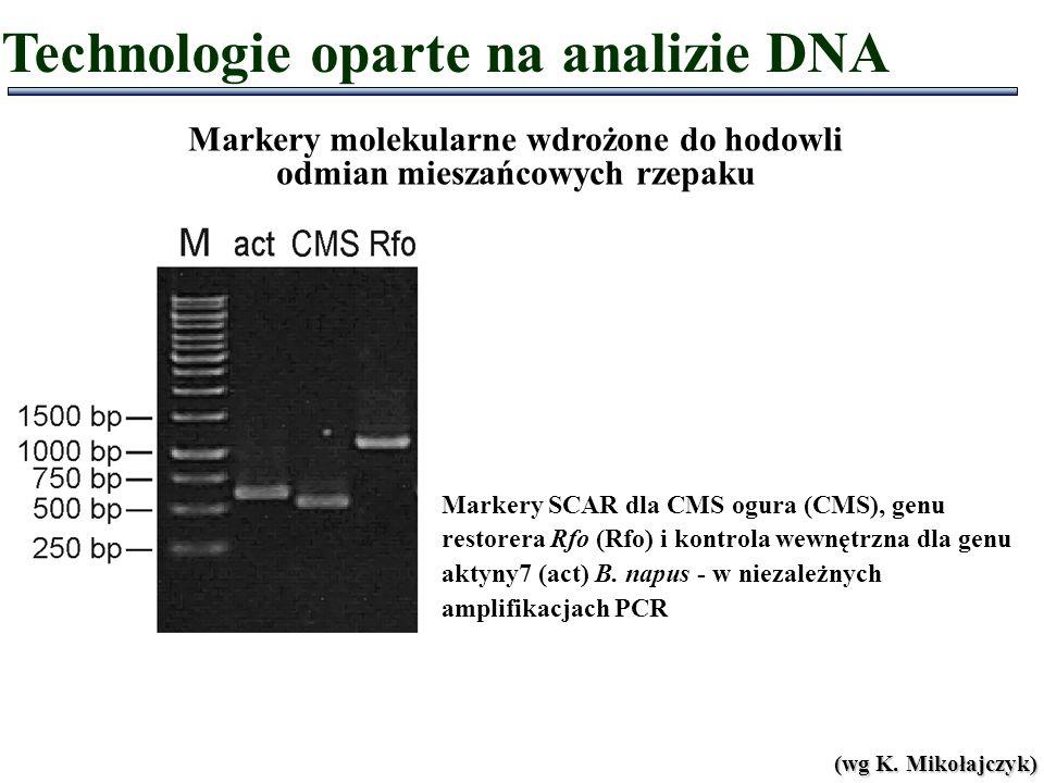 Markery SCAR dla CMS ogura (CMS), genu restorera Rfo (Rfo) i kontrola wewnętrzna dla genu aktyny7 (act) B. napus - w niezależnych amplifikacjach PCR (