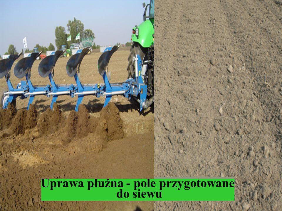 Uprawa płużna - pole przygotowane do siewu