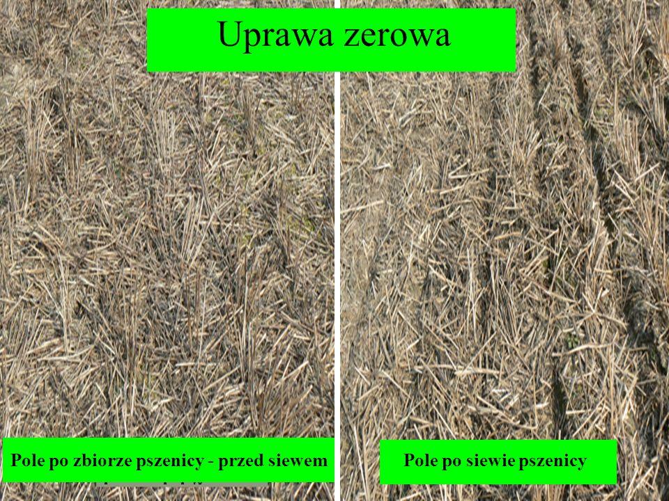 Uprawa zerowa Pole po zbiorze pszenicy - przed siewemPole po siewie pszenicy