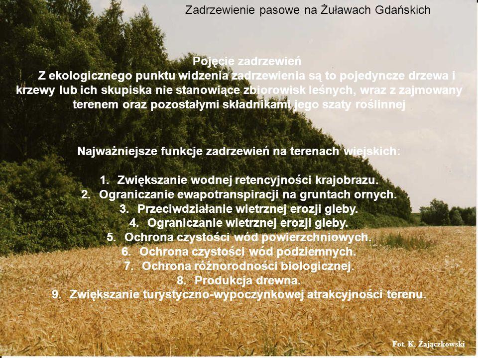 Najważniejsze funkcje zadrzewień na terenach wiejskich: 1.Zwiększanie wodnej retencyjności krajobrazu. 2.Ograniczanie ewapotranspiracji na gruntach or