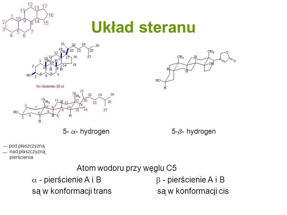 Układ steranu Atom wodoru przy węglu C5 - pierścienie A i B - pierścienie A i B są w konformacji trans są w konformacji cis --- pod płaszczyzną nad pł