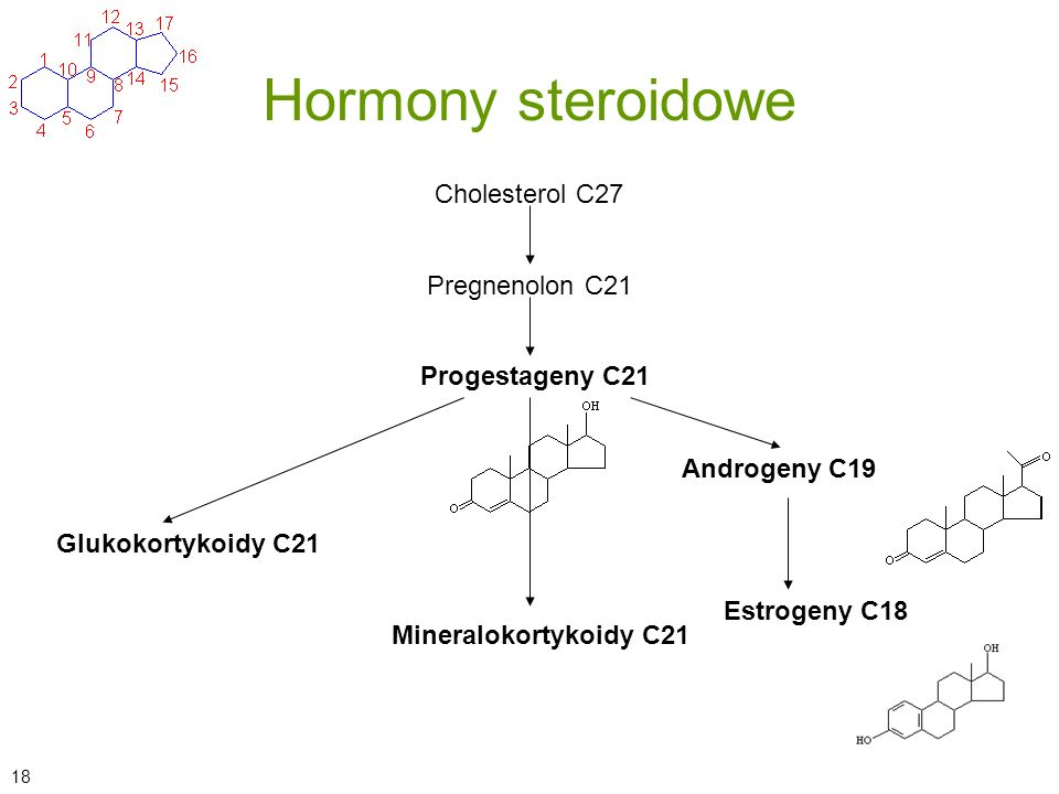 Hormony steroidowe Cholesterol C27 Mineralokortykoidy C21 Estrogeny C18 Androgeny C19 Progestageny C21 Pregnenolon C21 Glukokortykoidy C21 18