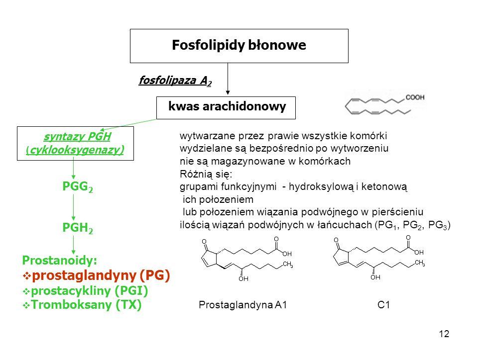 12 Fosfolipidy błonowe fosfolipaza A 2 kwas arachidonowy syntazy PGH ( cyklooksygenazy) PGG 2 PGH 2 Prostanoidy: prostaglandyny (PG) prostacykliny (PG