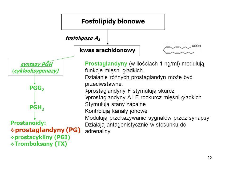 13 Fosfolipidy błonowe fosfolipaza A 2 kwas arachidonowy syntazy PGH ( cyklooksygenazy) PGG 2 PGH 2 Prostanoidy: prostaglandyny (PG) prostacykliny (PG