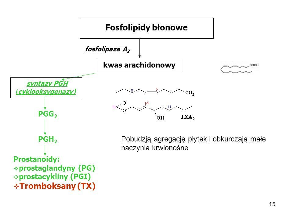 15 Fosfolipidy błonowe fosfolipaza A 2 kwas arachidonowy syntazy PGH ( cyklooksygenazy) PGG 2 PGH 2 Prostanoidy: prostaglandyny (PG) prostacykliny (PG