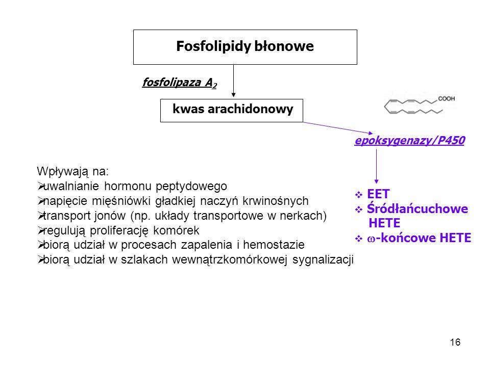 16 Fosfolipidy błonowe fosfolipaza A 2 kwas arachidonowy epoksygenazy/P450 EET Śródłańcuchowe HETE -końcowe HETE Wpływają na: uwalnianie hormonu pepty