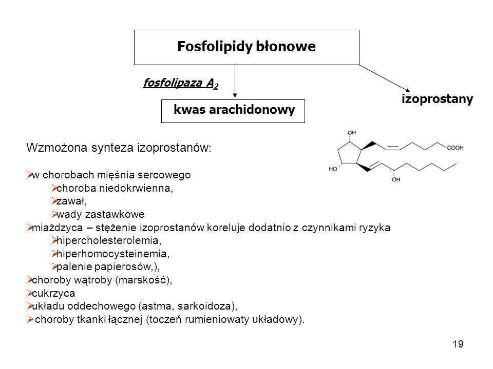 19 Fosfolipidy błonowe fosfolipaza A 2 kwas arachidonowy izoprostany Wzmożona synteza izoprostanów : w chorobach mięśnia sercowego choroba niedokrwien