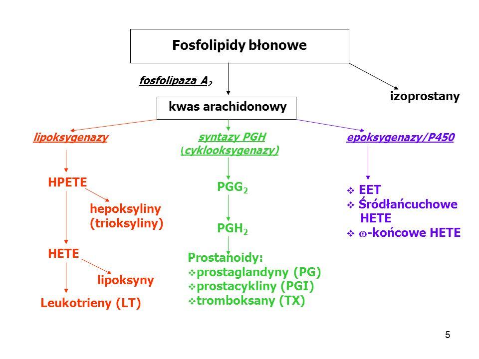16 Fosfolipidy błonowe fosfolipaza A 2 kwas arachidonowy epoksygenazy/P450 EET Śródłańcuchowe HETE -końcowe HETE Wpływają na: uwalnianie hormonu peptydowego napięcie mięśniówki gładkiej naczyń krwinośnych transport jonów (np.