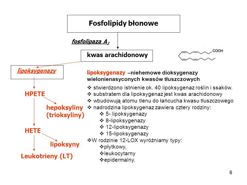 7 Fosfolipidy błonowe fosfolipaza A 2 kwas arachidonowy HPETE lipoksygenazy hepoksyliny (trioksyliny) HETE lipoksyny Leukotrieny (LT) 5-HPETE kwas 5-hydroperoksyeikozatetraenowy Hepoksyliny: monohydroksyepoksy pochodne AA odpowiadają za uwalnianie wapnia wewnątrzkomórkowego otwierają kanały potasowe.