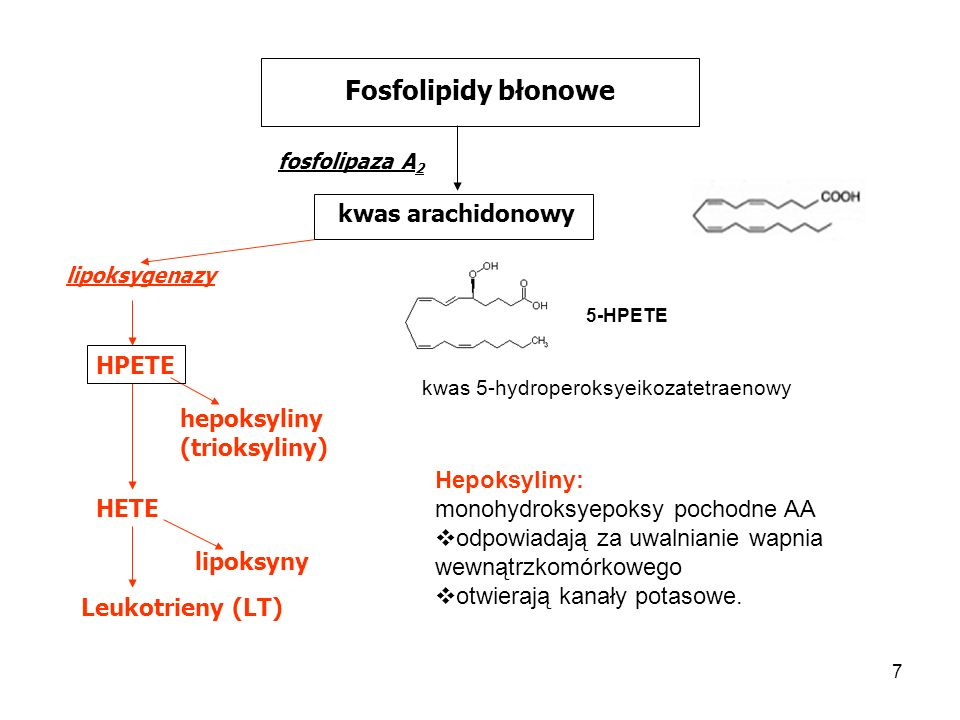 7 Fosfolipidy błonowe fosfolipaza A 2 kwas arachidonowy HPETE lipoksygenazy hepoksyliny (trioksyliny) HETE lipoksyny Leukotrieny (LT) 5-HPETE kwas 5-h