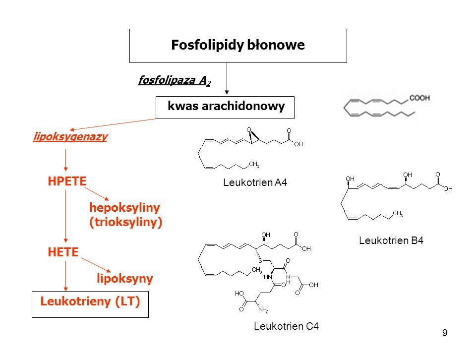 9 Fosfolipidy błonowe fosfolipaza A 2 kwas arachidonowy HPETE lipoksygenazy hepoksyliny (trioksyliny) HETE lipoksyny Leukotrieny (LT) Leukotrien A4 Le
