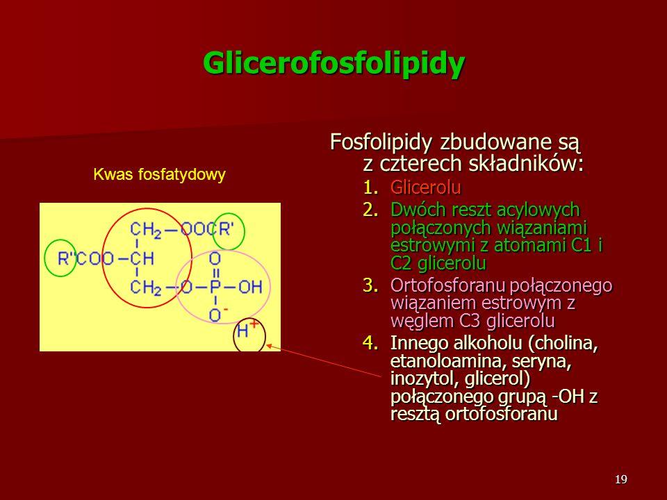 19 Glicerofosfolipidy Fosfolipidy zbudowane są z czterech składników: 1.Glicerolu 2.Dwóch reszt acylowych połączonych wiązaniami estrowymi z atomami C