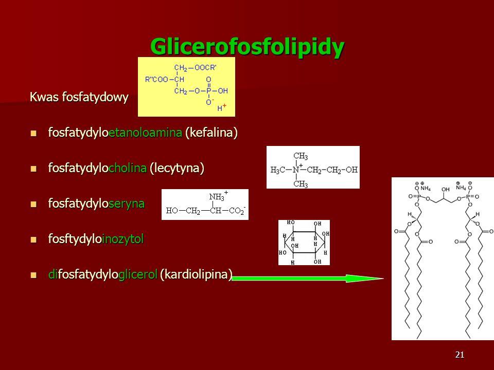 21 Glicerofosfolipidy Kwas fosfatydowy fosfatydyloetanoloamina (kefalina) fosfatydyloetanoloamina (kefalina) fosfatydylocholina (lecytyna) fosfatydylo