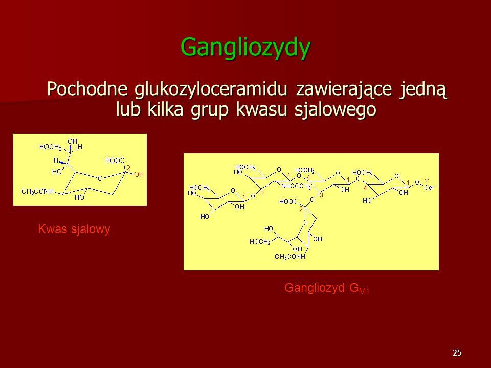 25 Gangliozydy Pochodne glukozyloceramidu zawierające jedną lub kilka grup kwasu sjalowego Gangliozyd G M1 Kwas sjalowy