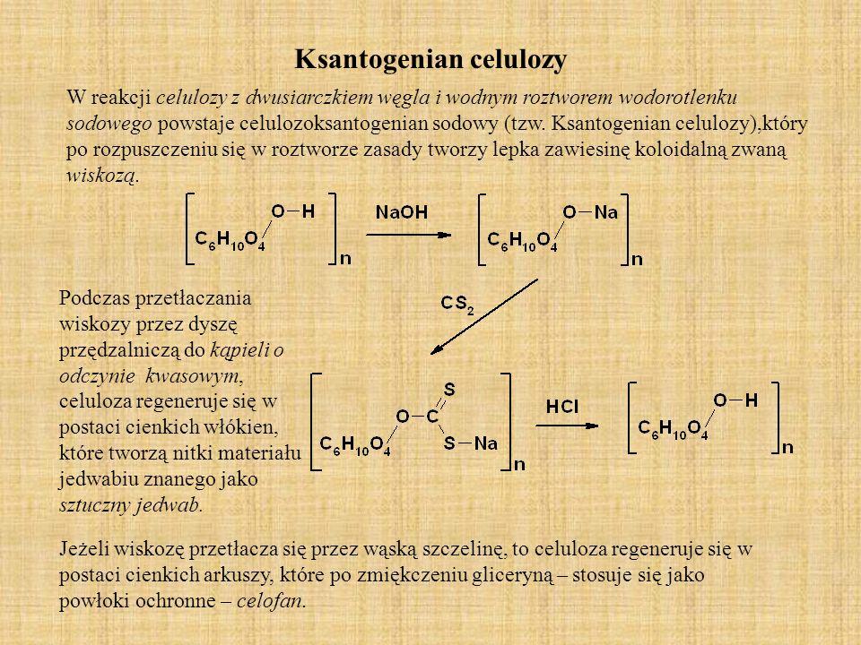 Octan celulozy Celuloza w obecności bezwodnika octowego lub kwasu octowego i małej ilości kwasu siarkowego przekształca się w pochodną triacylową (tzw.trioctan).