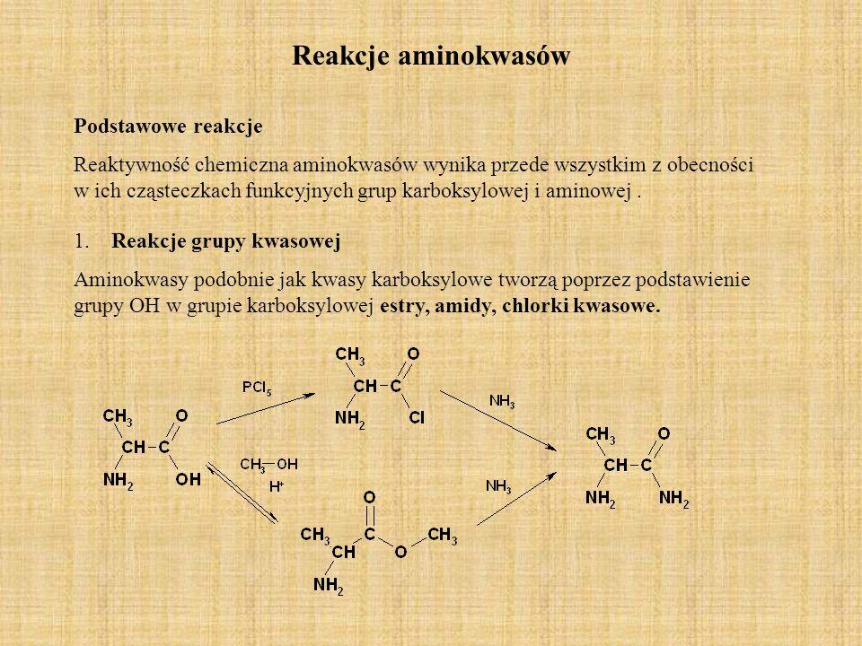 Reakcje aminokwasów Podstawowe reakcje Reaktywność chemiczna aminokwasów wynika przede wszystkim z obecności w ich cząsteczkach funkcyjnych grup karboksylowej i aminowej.