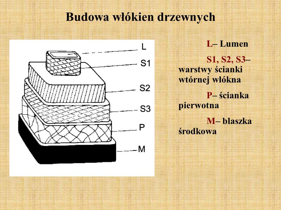Budowa włókien drzewnych L– Lumen S1, S2, S3– warstwy ścianki wtórnej włókna P– ścianka pierwotna M– blaszka środkowa