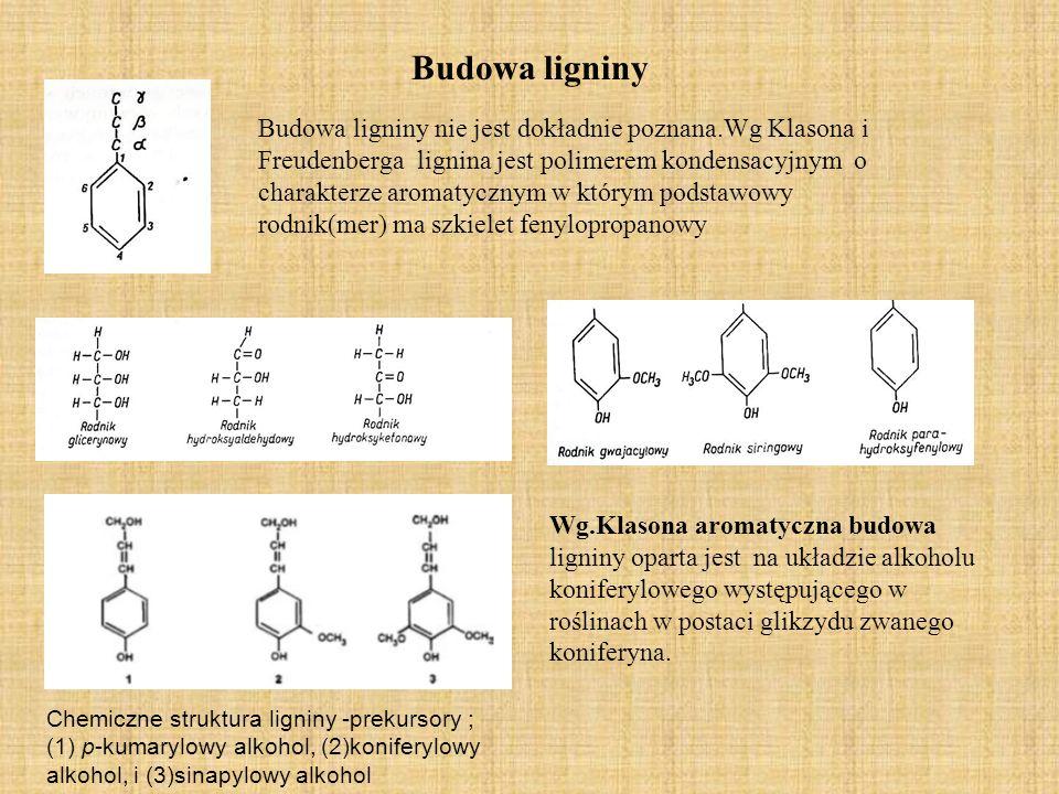 Budowa ligniny Budowa ligniny nie jest dokładnie poznana.Wg Klasona i Freudenberga lignina jest polimerem kondensacyjnym o charakterze aromatycznym w którym podstawowy rodnik(mer) ma szkielet fenylopropanowy Wg.Klasona aromatyczna budowa ligniny oparta jest na układzie alkoholu koniferylowego występującego w roślinach w postaci glikzydu zwanego koniferyna.
