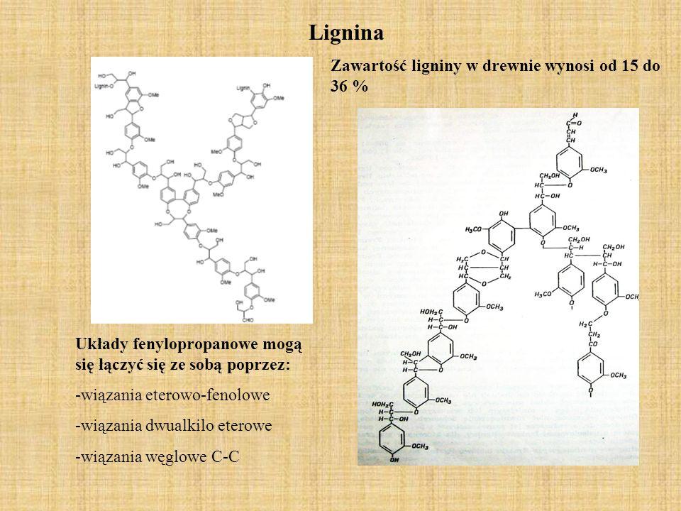 Lignina Układy fenylopropanowe mogą się łączyć się ze sobą poprzez: -wiązania eterowo-fenolowe -wiązania dwualkilo eterowe -wiązania węglowe C-C Zawartość ligniny w drewnie wynosi od 15 do 36 %
