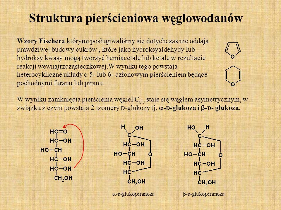 Struktura pierścieniowa węglowodanów Wzory Fischera,którymi posługiwaliśmy się dotychczas nie oddaja prawdziwej budowy cukrów, które jako hydroksyaldehydy lub hydroksy kwasy mogą tworzyć hemiacetale lub ketale w rezultacie reakcji wewnątrzcząsteczkowej.W wyniku tego powstaja heterocykliczne układy o 5- lub 6- członowym pierścieniem będące pochodnymi furanu lub piranu.