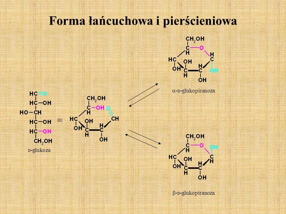 Polisacharydy Polisacharydy sa to wielocukry zbudowane z dużej liczby (od kilkuset do kilku tysięcy) skondensowanych cząsteczek cukrów prostych.