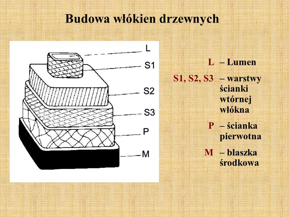 Budowa włókien drzewnych L – Lumen S1, S2, S3 – warstwy ścianki wtórnej włókna P – ścianka pierwotna M – blaszka środkowa